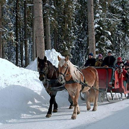 Romantic horse-drawn sleigh tour